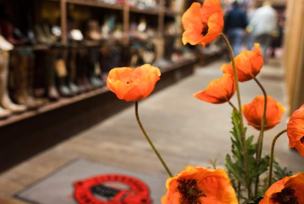 Poppies in Harry's Boots store